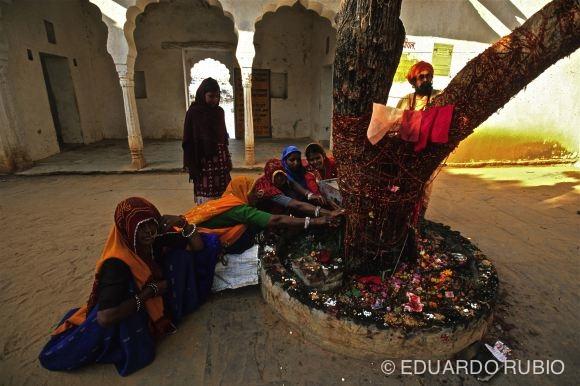 El árbol sagrado de Pushkar